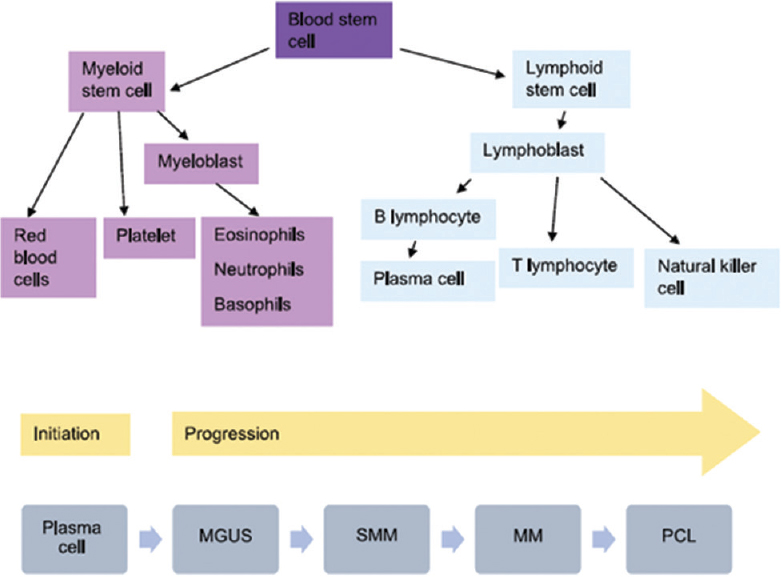 Figure 1: Hematopoietic stem cell differentiation pathways and the spectrum of plasma cell dyscrasias. MGUS: Monoclonal gammopathy of unknown significance, MM: Multiple myeloma, PCL: Plasma cell leukaemia, SMM: Smouldering multiple myeloma